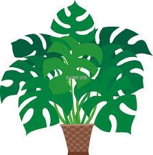 植物とのちょうど良い距離感。